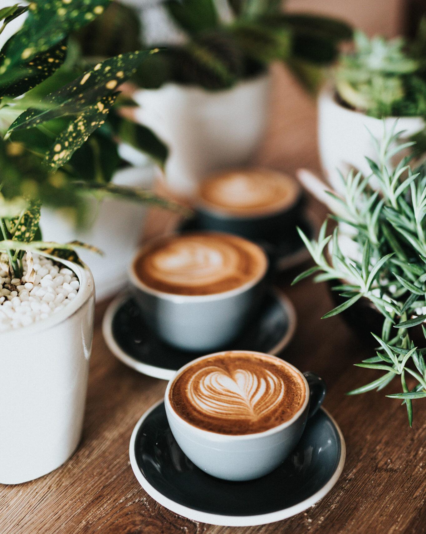 You are currently viewing Bio-Kaffee im Olivani